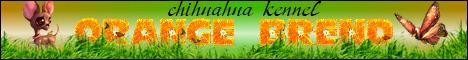 Сайт питомника чихуахуа
